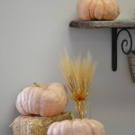 Porcelain Doll F1 Pink Pumpkin at DP SEEDS, Yuma, AZ