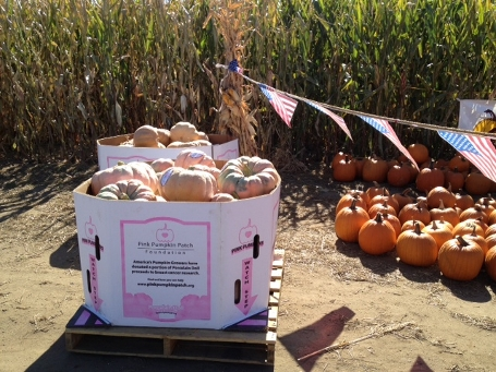 Local Farmer Growing Pink Pumpkins for Breast Cancer Awareness